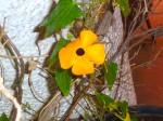 Floramarilla0226