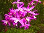 Orquideas0225