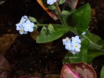 Tinyflowers0220